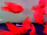 北京朝陽魚缸維護 魚缸訂制設計 造景規劃