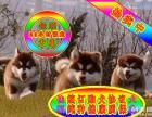真正的自己实体狗场 专业繁殖阿拉斯加 签订协议