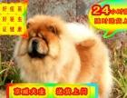 松狮幼犬——送狗用品——24小时营业——可刷卡