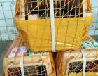 广州长沙宠物托运往各地省会办理手续