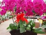 廣州市植物出租天河 植物銷售科學城 植物租賃 植物出擺