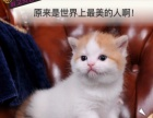 多肉肉猫舍宠物猫