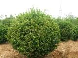 昌平庭院绿化