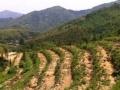 安徽省宣城87亩林地出租