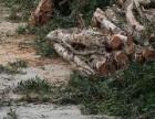 专业代客砍树,修剪绿化,高空修剪树枝,清理树枝树叶等