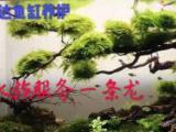 上海全市上门清洗鱼缸搬家海水缸淡水缸维修维户