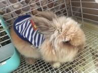 装让可爱的猫猫兔