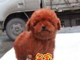 佛山哪有小型宠物狗买卖 宠物狗品种大全价格