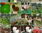 动物租赁、展会策划、羊驼出租、百鸟展出租,景区活动