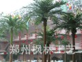 枫林性价比高的仿真弯杆椰子树适用酒店商业街车站小区广场等场所