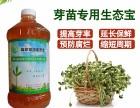 河南益富源芽苗菜营养液栽培各种芽苗菜不生病早采收