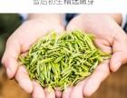 敘府 辦公用茶 高品質辦公用茶天府龍芽明前炒青綠茶采購價格