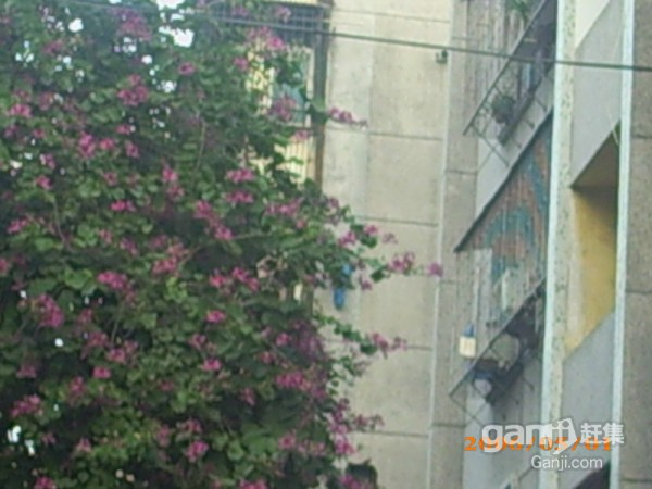老香洲 紫荆园 1室 0厅 25平米 整租