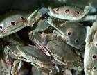 直供各种海鲜(从鱼船到餐桌)