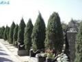 霸陵墓园新区—西安较美丽的陵园墓地
