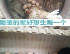 正宗农家野外 散养土鸡蛋新鲜草鸡蛋无添加柴鸡蛋