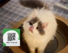 天津哪里卖加菲猫 天津哪里有宠物店 天津哪里卖宠物猫便宜