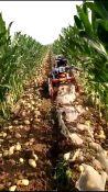 使用灵活耐用花生土豆收获机 花生收获机