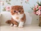 上海广州深圳北京折耳猫出售 淘宝搜:双飞猫