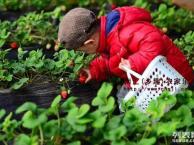 上海郊区农家乐 自助烧烤 钓鱼棋牌 采草莓摘西瓜 划船看海