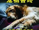 广州从一宠物火化善终 猫狗仓鼠松鼠乌龟鸟蛇鱼蜥蜴火化安葬