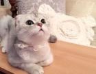 精品猫咪批发