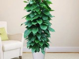 園林綠化養護植物墻庭院綠化花卉綠植銷售施工養護