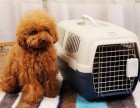 上海宠物托运物流价格收费标准
