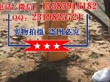 小型气动打桩机植桩机河北九江水利厂家直销