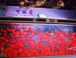 观赏鱼销售,组装鱼缸,鱼缸长期护理保养