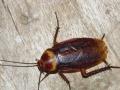 鞍山绿家园灭蟑螂灭老鼠灭蚂蚁