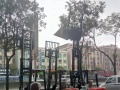 惠州柴油叉车回收惠州电动叉车回收二手叉车收购