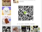 河南最大狗场一直销各种世界名犬一视频选狗支持发货