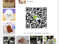 江苏最大狗场一直销各种世界名犬一视频选狗支持发货