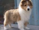东方 狗年行大运 大吉大利 喜乐蒂在等着你带它回家.