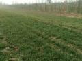 国际港务区2200平土地适合种植养殖出租(红铺网)