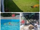 惠州高端园林家庭模拟式训练学校一一金色世家