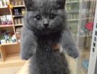 MEOW猫生活馆: 泉州最大宠物猫专卖店