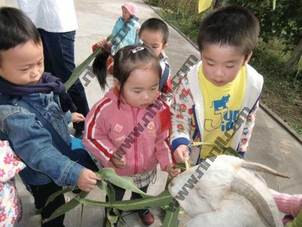 上海周边农家乐旅游 采草莓挖野菜 吃香喷喷灶头饭菜