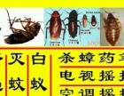 专业灭蟑螂,白蚁,臭虫,老鼠