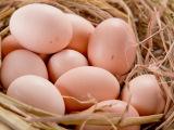 江西农家散养土鸡蛋乌鸡蛋 山区放养土鸡蛋 禽蛋批发
