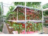 优良的立体栽培哪里有,立体栽培项目