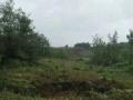 西山周边 西山区团结镇卧云山庄附近山地 林地 80亩