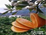 成都水果配送服务,九零食代食品有限公司汇果达配送中心水果