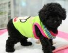 中国较大贵宾犬繁殖基地 百度一下唯缘犬舍