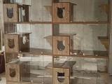 豪华猫别墅笼猫多层笼猫寄养笼猫舍展示柜宠物恒温笼防飞毛玻璃笼