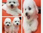 上海哪里有宠物店 上海哪里有宠物市场