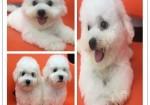 广州哪里有宠物狗 广州阿拉斯加多少钱一只 广州宠物店