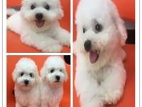 广州阿拉斯加多少钱 广州哪里有宠物狗 广州宠物店