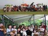 中山金毛犬价格 养殖场直销三十多种名犬 多窝挑选包健康可送货